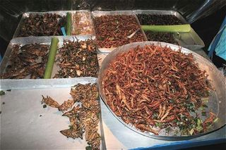 Bangkok_insect_food